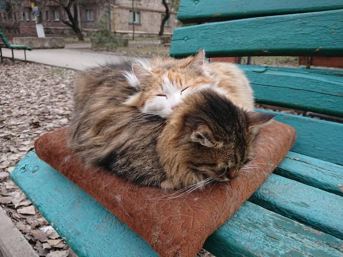 Жмёмся мы друг к дружке, чтоб теплее стало Кот, Уют, Тепло