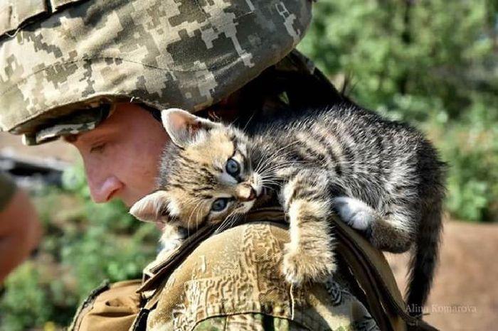 Котики и война. Фотография, Кот, Война, Каринки из интернета, Мир стал чуточку лучше, Длиннопост