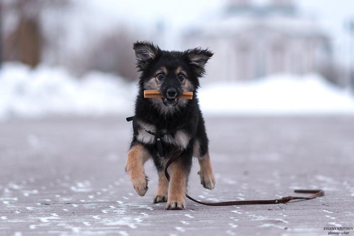 Щенок. Собака, Метисы, Фотография, Длиннопост