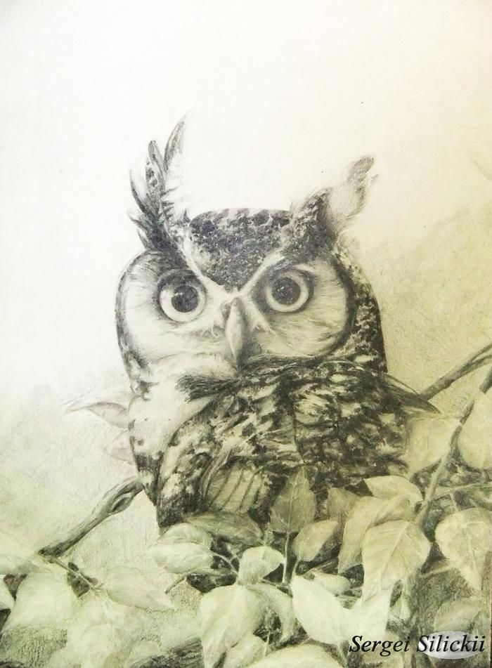 Сова карандашом. Рисунок карандашом, Сова, Птицы, Анималистика, Рисунок