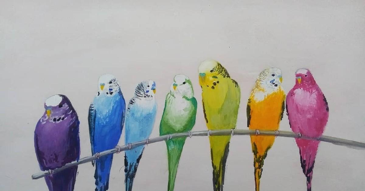 Картинки нарисованные волнистые попугаи