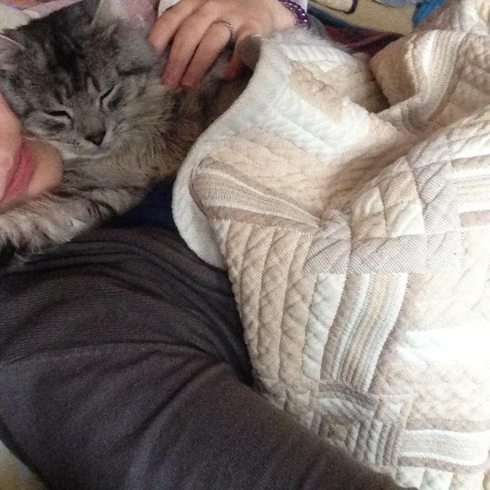 Помогите пристроить кота в заботливые руки. Тула, Тульская область, Кот, Приют, Помощь животным, Видео, Длиннопост, Без рейтинга