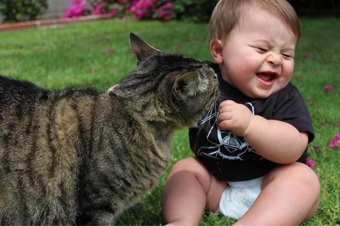 Встреча!!! Дети, Кот, Котомафия