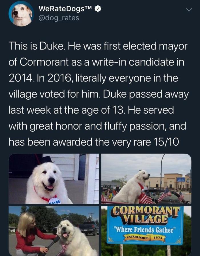 Когда у тебя есть право проголосовать за своего кандидата Дюк, Reddit, Мэр, Собака, Право выбора