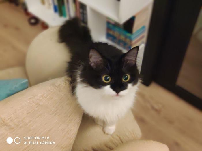 А держите кошечку Кот, Пушистый