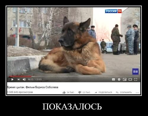 Показалось Показалось, Собака, Кенгуру, Цыгане, Полиция