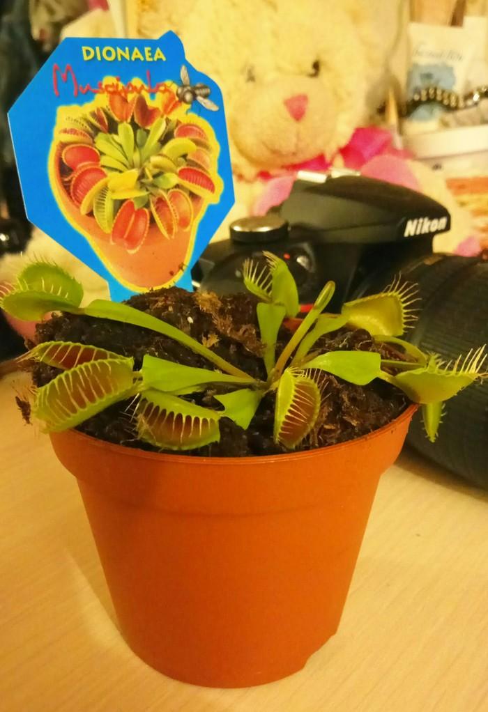 Зелёный монстрик Растения, Комнатные растения, Цветы, Биология, Видео, Длиннопост