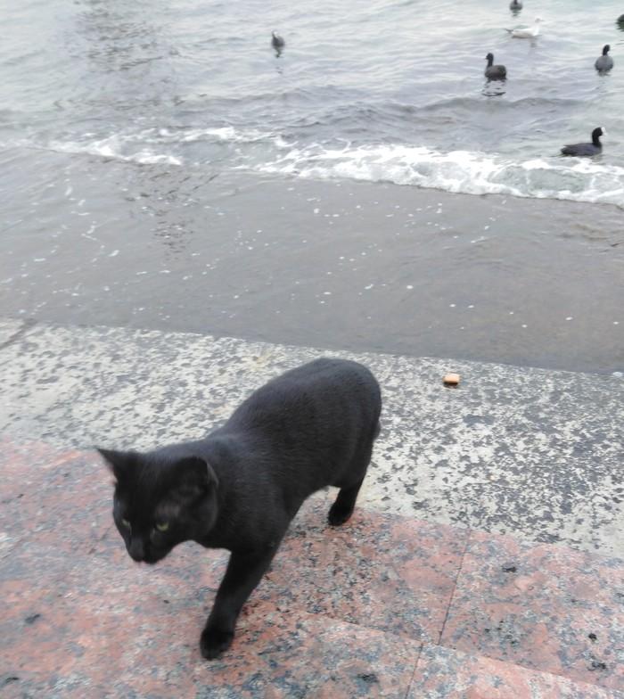 Вот такая спутница))) Кот, Черное море, Длиннопост