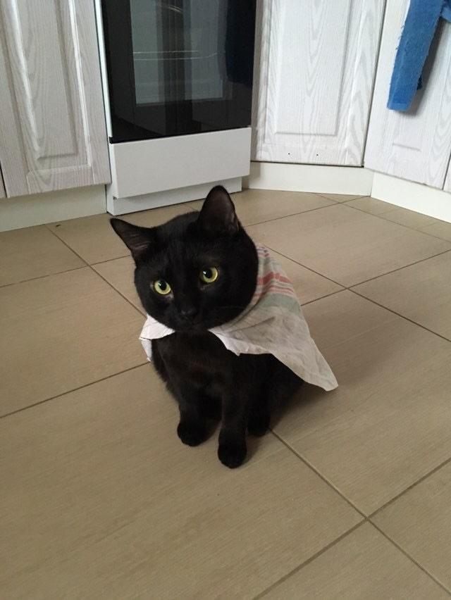 Этой квартире нужен новый герой! Кот, Герои, Супермен, Домашние животные