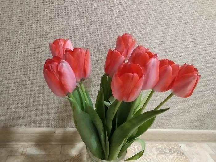 Очередь за цветами 8 марта, Цветы, С праздником