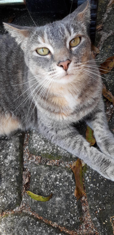 Кошка Лукошка Кот, Милота