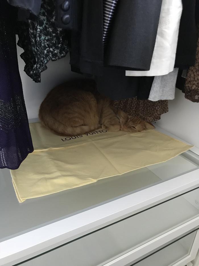 Целый день искали кота Кот, Шкаф, Домашние животные
