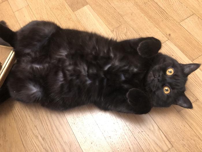 Смотрите какой жирненький котище!