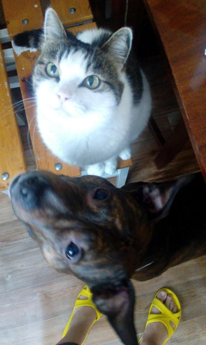 Знакомтесь, Кытца -кошка-бабушка. Ей 13 лет... Котопес, Кошка старушка, Кот