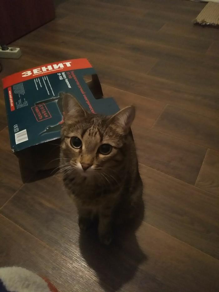Новая коробочка Кот, Коробка, Коробка и кот, Длиннопост, Домашние животные