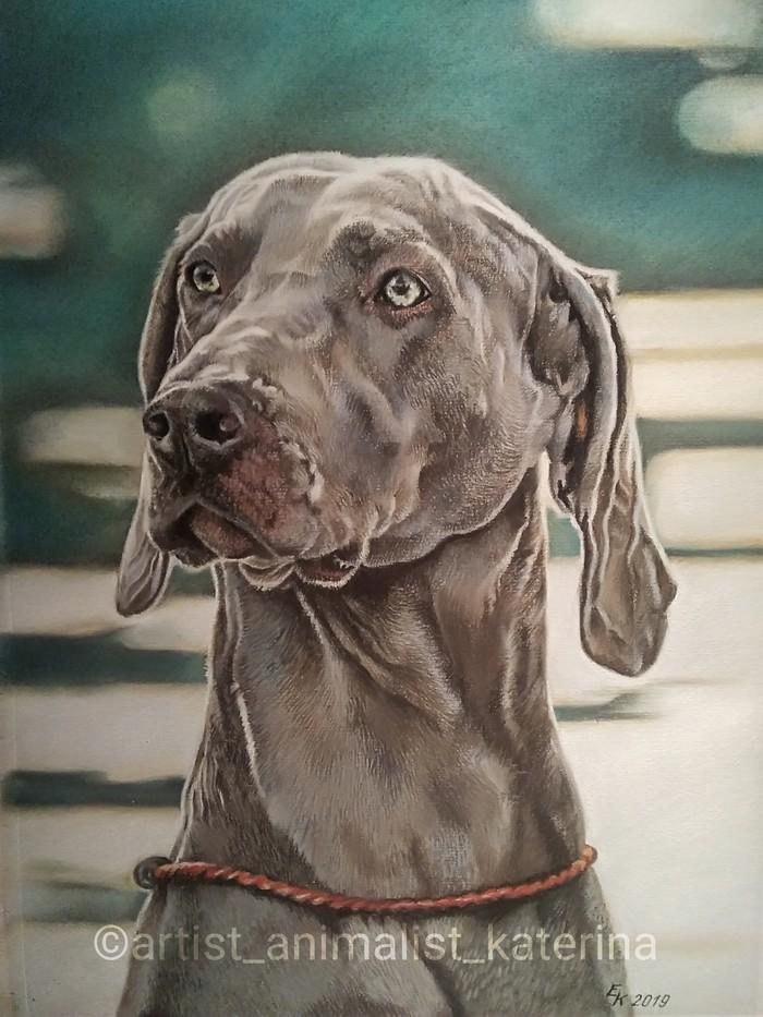 Рисую  цветными карандашами, пастелью. Портрет, Собака, Рисунок карандашом, Рисунок, Пастель, Художник, Длиннопост