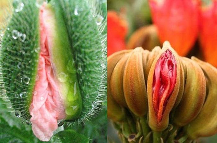Ботанический бунт Бунт, Овощи, Цветы, Длиннопост, Клубничный бунт