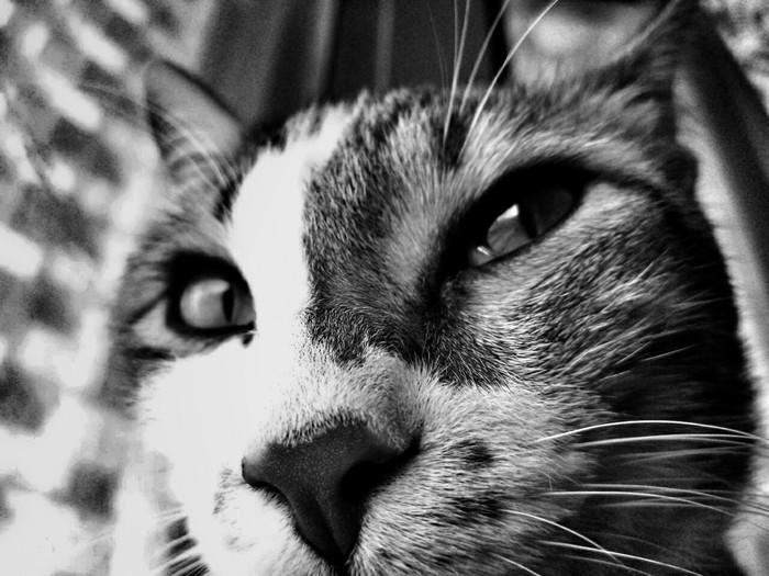 Лео Кот, Морда, Царь, Фото на тапок