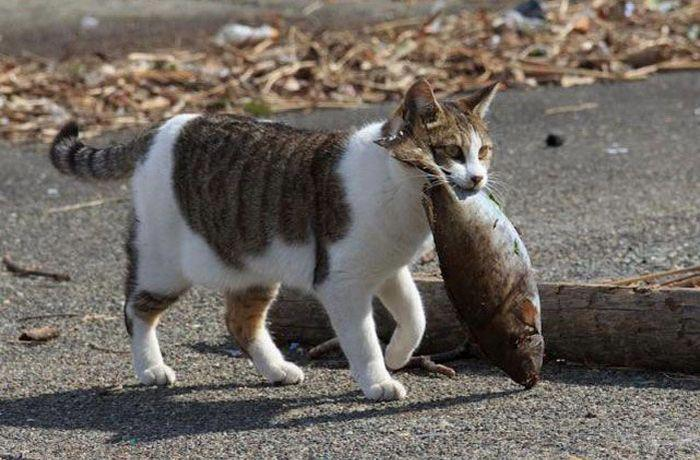 Выглядеть как то, что кошка притащила? -англ.идиома Английский язык, Изучаем английский