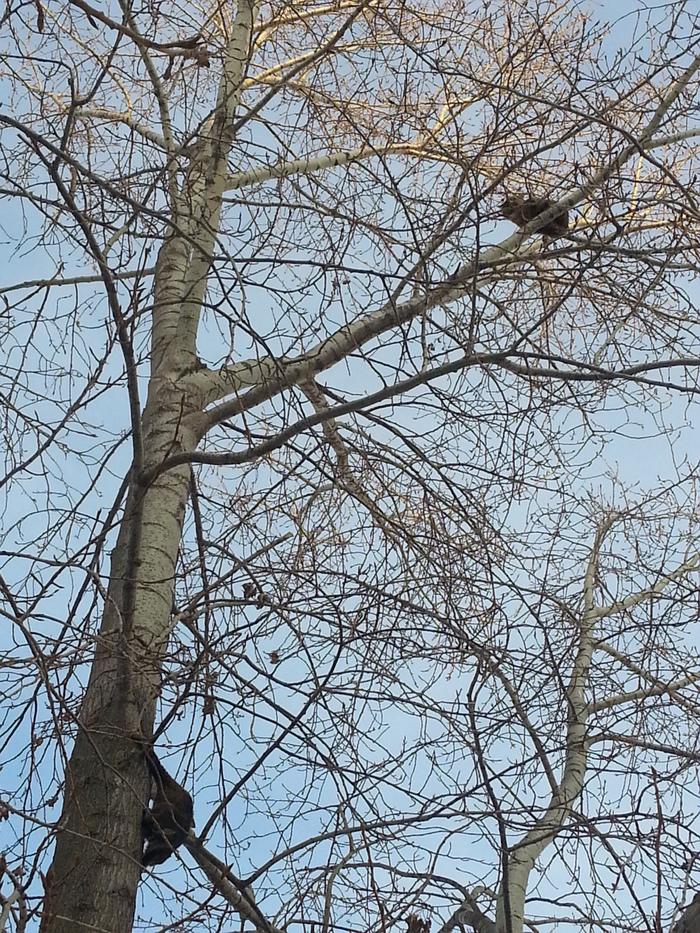 Весна, коты прилетели. Кот, Фотография, Длиннопост