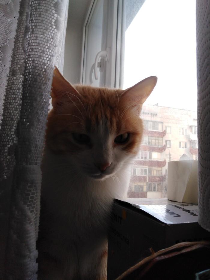 Очень расстроен Кот, Рыжий, Усатый-Полосатый, Недовольство