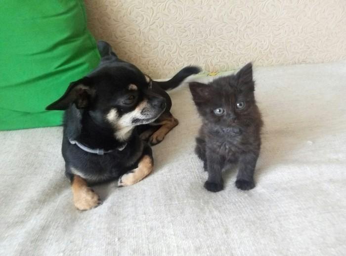 Неожиданное счастье Кот, Животные, Доброта, Человечность, Длиннопост, Домашние животные