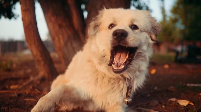 Замедленая съемка. Собака ловит муху))) Собака, Муха, Камера, Домашние животные