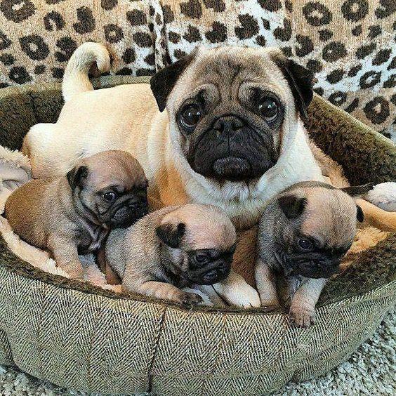 Счастье материнства