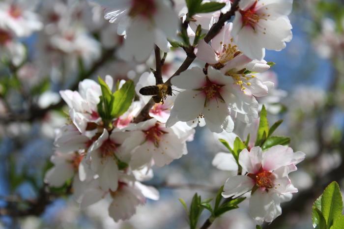 Весна. Весна, Прага, Опыление, Цветы
