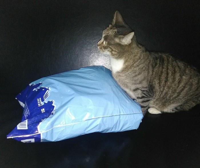 Бумеранг добра. Кот, Отчет по обмену подарками, Длиннопост, Альтруизм, Буккроссинг, Добро