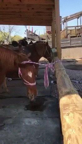 Лошадь Гудини