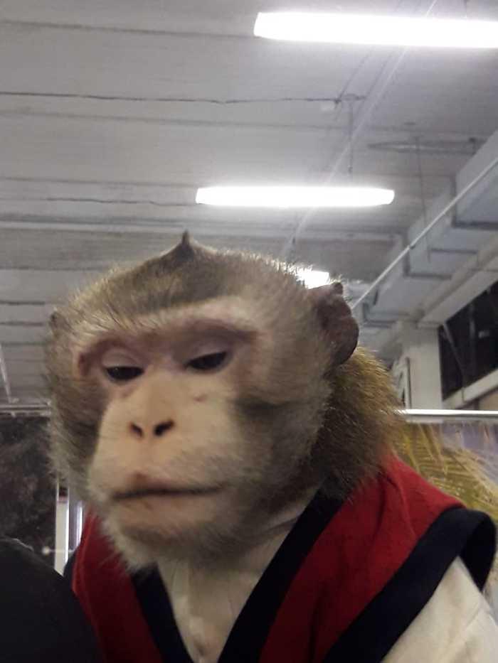 Писец (не зверь) Барнаул, Контактный зоопарк, Живодерство, Помощь животным, Жестокость, Видео, Длиннопост, Без рейтинга
