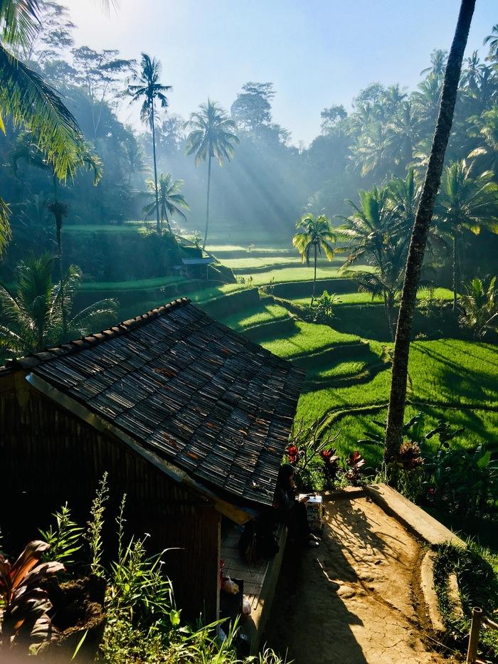 Рассвет на рисовых террасах Тегаллаланга