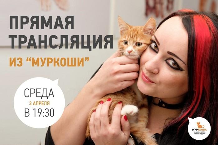 """Прямая трансляция из """"Муркоши"""" Приют для животных, Приют муркоша, Муркоша, Помощь животным, Кот, Котята"""