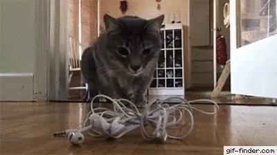 Вот это прыжок! Кот, Прыжок, Наушники, Страх, Испугался как ребёнок, Гифка