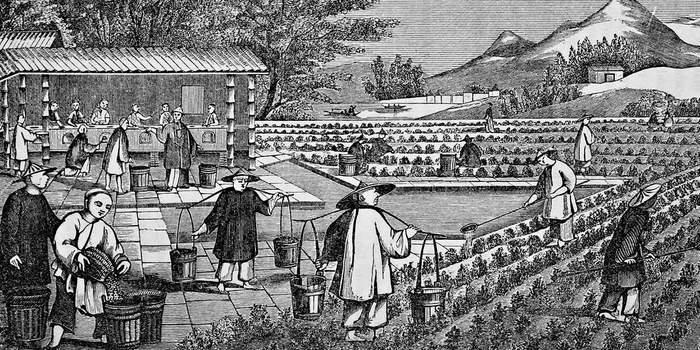 «Ничего личного, просто бизнес»: как Британия втянула Китай в опиумные войны Длиннопост, История, Война, Англия, Китай