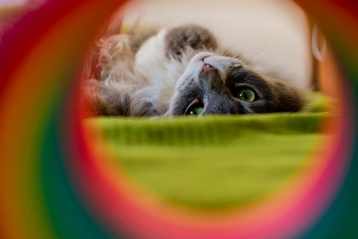 Франт ждёт весну Кот, Глаза, Фотография, Длиннопост, Домашние животные