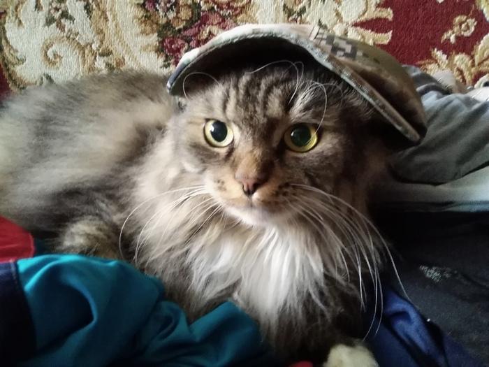 Кот-гопник Кот, Кепка, Гопники, Пушистый