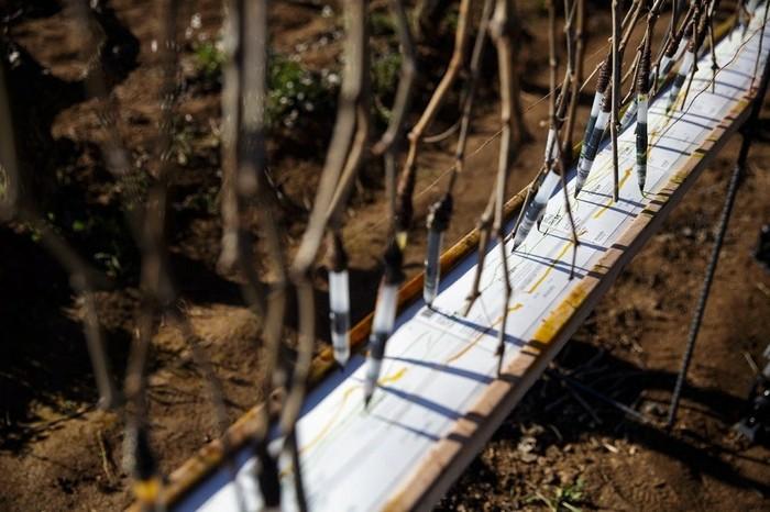 Этикетка вина, дизайнерами которой стали виноградные ветки Дизайн, Вино, Этикетка, Длиннопост