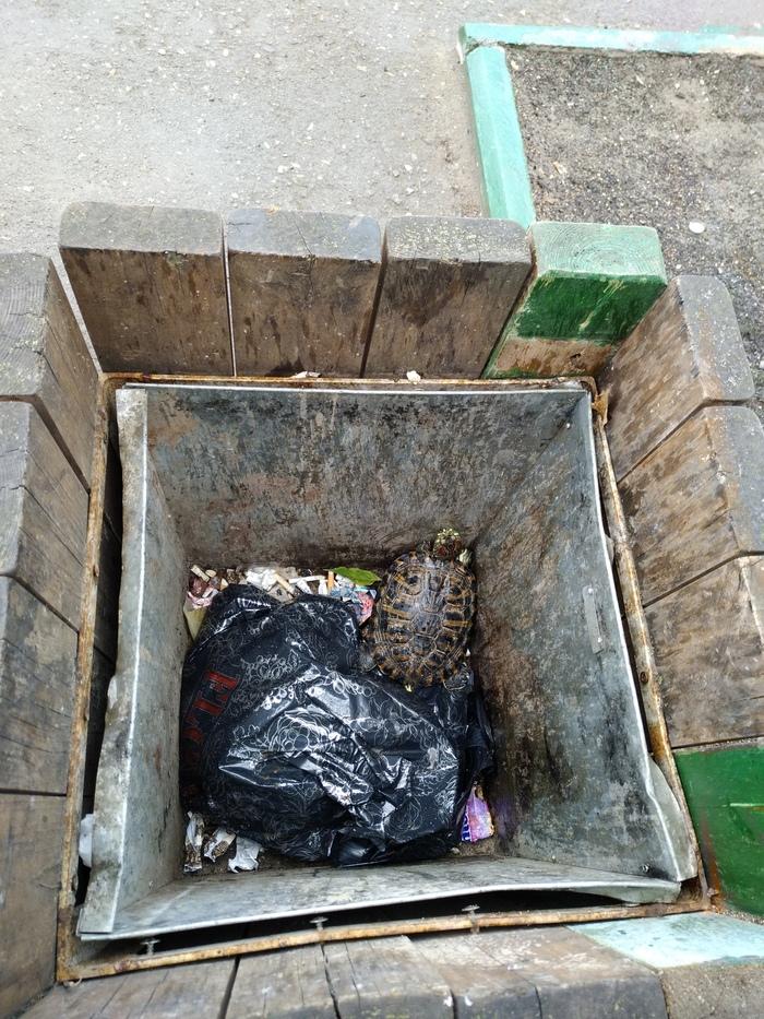Живодеры выбросили черепах в пакетах в мусорку Животные, Черепаха, Одинцово, Подмосковье