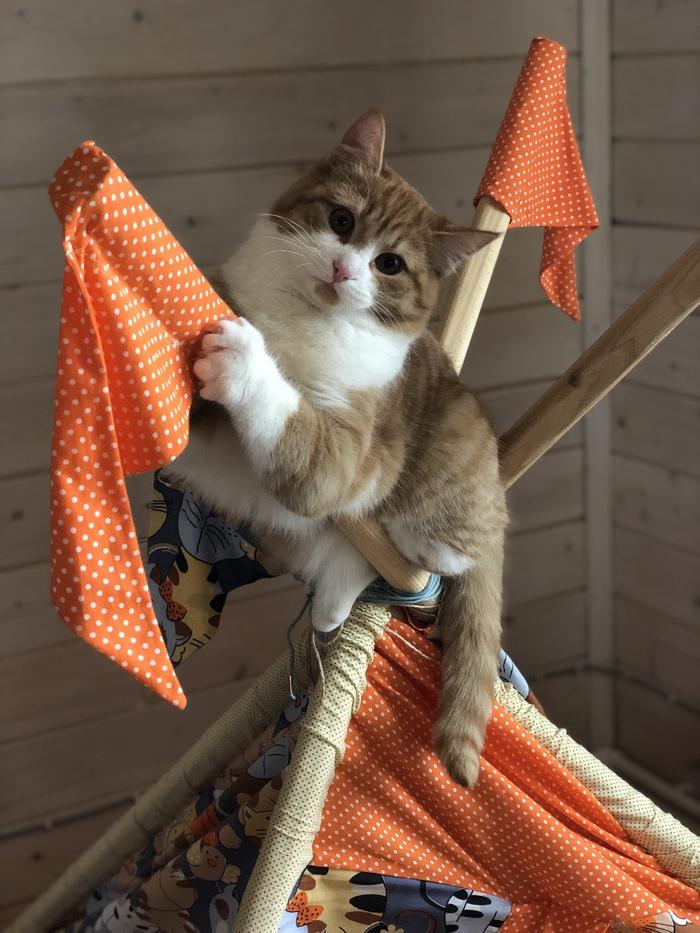 Когда в доме маленькие дети  И нужно замаскироваться на шалаше) Кот, Прятки, Рыжий, Длиннопост