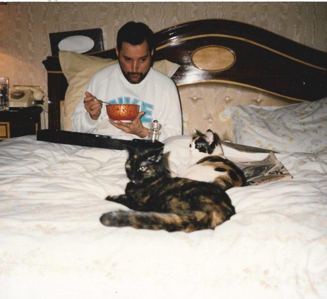 Фредди и кошки. Кот, Queen, Фредди Меркьюри, Любовь к животным, Милота, Длиннопост