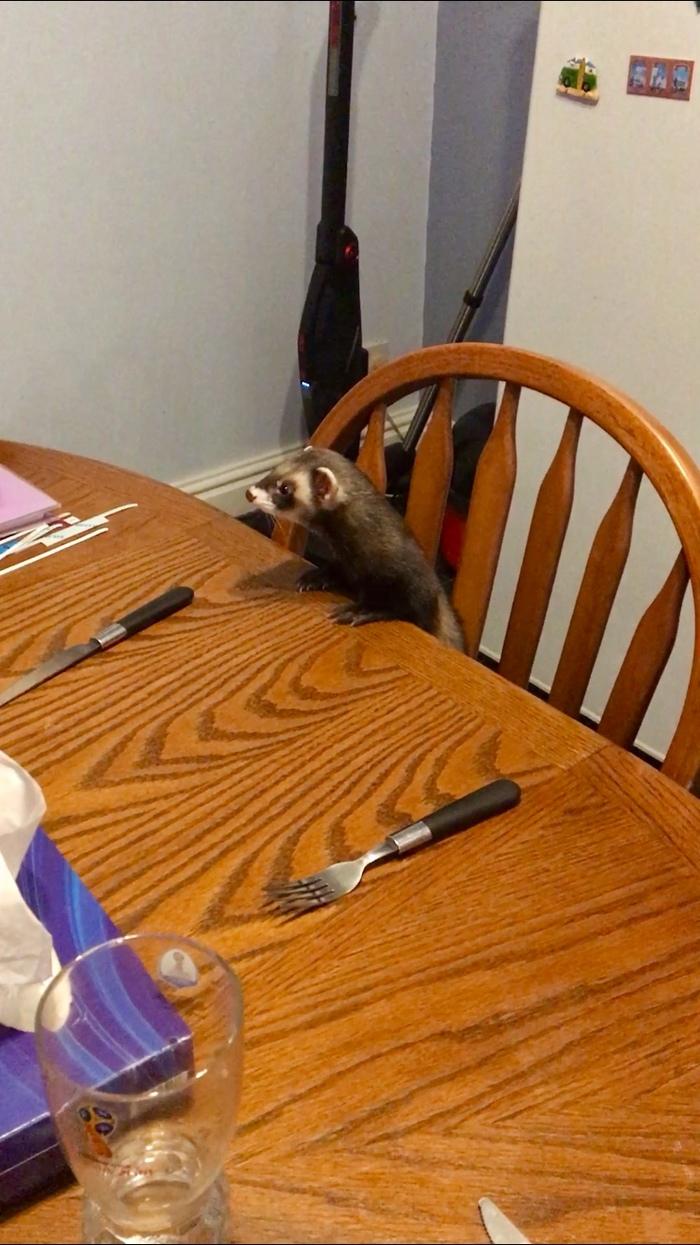 Неси мой ужин, мать :D