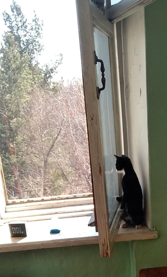 Когда боишься улицы, но любопытство перевешивает Кот, Страх, Любопытство, Милота, Длиннопост