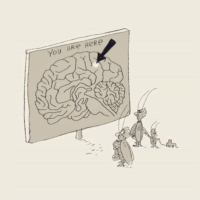 Карта памяти. Мозг, Тараканы, Путеводитель, Карикатура