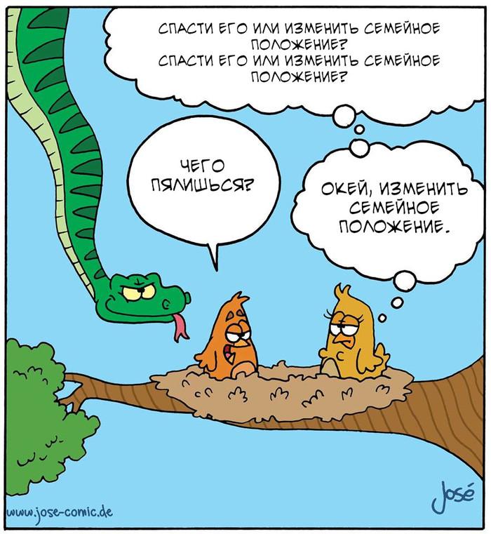 Иногда полезно быть вежливым) Jose Comics, Птицы, Змей, Перевод, Комиксы, Перевел сам