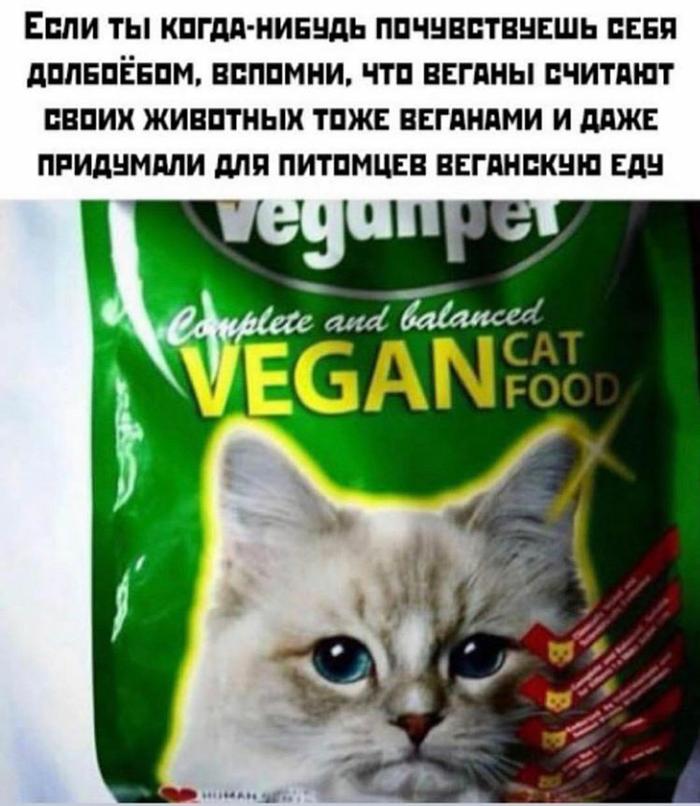 Бедный котик Кот, Веганы, Мат, Корм