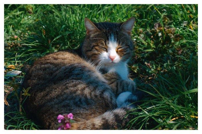Кот нежится на весеннем солнышке