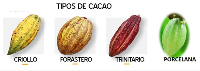 Как я летал за фарфоровым шоколадом. Венесуэла, Венесуэльские зарисовки, Каракас, Длиннопост
