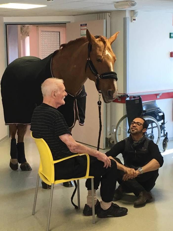 Во Франции конь-терапевт навещает больных Альцгеймером Франция, Терапия, Альцгеймер, Лошади, Длиннопост